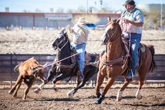Team Roping Competition Foto de Stock