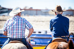 Team Roping Competition Imagem de Stock Royalty Free