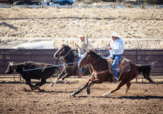 Team Roping Competition Stock Image