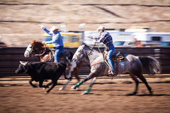 Team Roping Competition. Wickenburg, USA - February 5, 2013: Riders compete in a team roping competition in Wickenburg, Arizona, USA Royalty Free Stock Photography