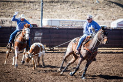 Team Roping Competition Royalty Free Stock Photos