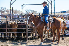 Team Roping Competition Stock Images