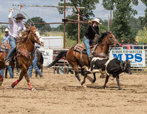 Team Roping Royalty Free Stock Image