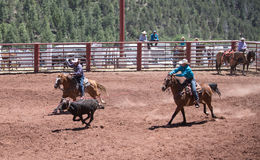 Team Roping Royalty Free Stock Photos