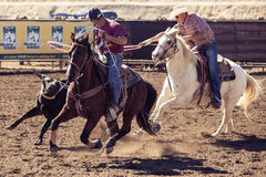 Team Roping in Wickenburg Stock Image