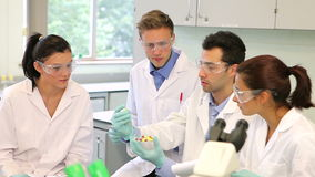 Team of science students working in the lab stock video footage
