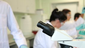 Team of science students working in the laboratory stock footage
