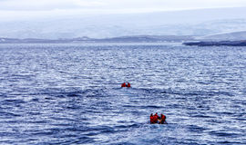 Team of scientists from Antarctica back to Palmer Station. A team of scientists from the United States returns in zodiac at Palmer Station on Anvers Island in Stock Images