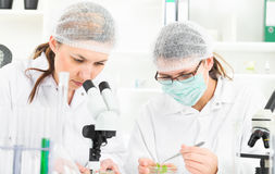 Team of scientists in a laboratory working on Royalty Free Stock Photos