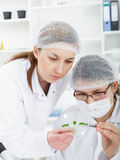 Team of scientists in a laboratory working on Stock Photos