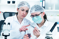 Team of scientists in a laboratory working on Royalty Free Stock Photography