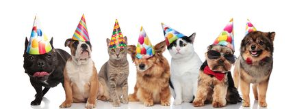Team of seven happy pets wearing colorful birthday hats