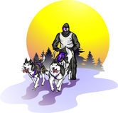 Team of Siberian Huskies against a landscape Stock Photo
