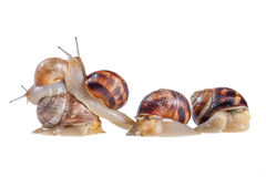 Team of snails Stock Photos