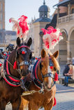 Team of two decorated horses for riding tourists Royalty Free Stock Photo