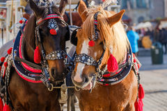 Team of two decorated horses for riding tourists Stock Photos