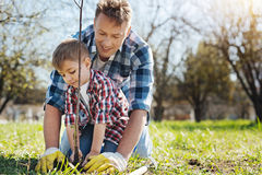 Team of two male family members gardening together royalty free stock photo