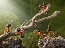 Team van mieren die roestige boom opsplitsen Royalty-vrije Stock Afbeeldingen