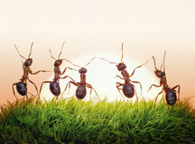 Team van mieren op zonsopgang, vreugde van het leven, concept Royalty-vrije Stock Afbeeldingen