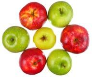 Team van zeven rijpe appelen op witte achtergrond Stock Foto