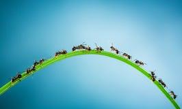 Team von Ameisen. Lizenzfreies Stockfoto