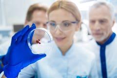 Team von den anerkannten Wissenschaftlern, die Blut aufpassen Stockfotos