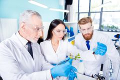 Team work concept. Three workers of laboratory are ckecking the. Analysis of the sample of plant. They are wearing labcoats, safety glasses and gloves Royalty Free Stock Photo