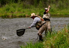 Team Work. Father, and son reeling in, and netting a fish, while out fly-fishing Royalty Free Stock Photo