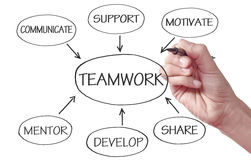 Team work flow chart diagram. The key to strong leadership and teamwork sketched on a white board Royalty Free Stock Photos