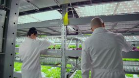 Team work of scientists and farmers men and women using modern technology and hydroponics. The business of growing. Vegetables and salads in a bad environment stock footage