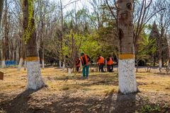 Team of workers ready to start planting trees with their shovels on a sunny spring day. royalty free stock images