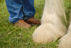 Teammates. View of legs and feet of man and horse standing by each other Stock Photos