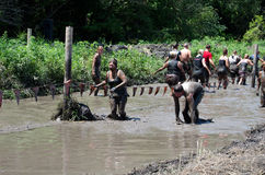 Teams in the mud. Groups of men and women move through the slimy mud at the 2012 mudathlon in indiana Royalty Free Stock Images