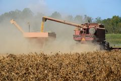 On a family farm a harvester dumps a load of soybeans into a hopper Royalty Free Stock Images