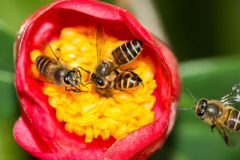 Teamwork of bees Stock Photo