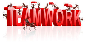 Teamwork collaboration or cooperation. Teamwork ants cooperation and collaboration in building word Stock Photos