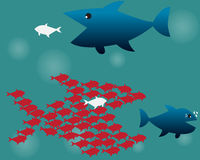 Teamwork Concept,Big Fish chasing Small fish Stock Photography