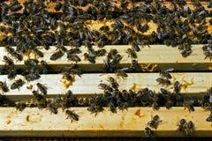 Teamwork in der Honigproduktion innerhalb des Bienenstockkastens lizenzfreie stockbilder