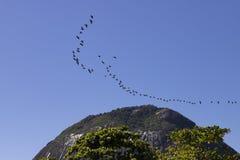 Teamwork of flying birds Royalty Free Stock Image