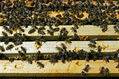 Teamwork in the honey production inside hive box