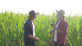 Teamwork smart farming husbandry concept slow motion video. two men agronomist two farmers shake hands teamwork business. Success agriculture in corn field is stock video footage