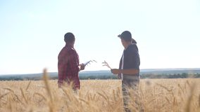 Teamwork smart farming slow motion lifestyle video. two farmers work in wheat field. farmers explore are studying. man stock footage