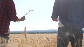 Teamwork smart farming slow motion video. Two farmers work in wheat field. Farmers explore are studying. Man with. Digital tablet wheat field summer lifestyle stock video