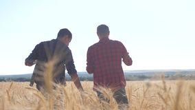 Teamwork smart farming. two farmers work in wheat field. farmers explore are studying. man with digital tablet Wheat. Field summer in the field wheat bread stock video footage