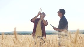 Teamwork smart farming. two farmers work in a wheat field. farmers lifestyle explore are studying. man with digital. Teamwork smart farming. two farmers work in stock footage
