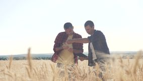 Teamwork smart farming. two farmers work in a wheat lifestyle field. farmers explore are studying. man with digital stock video