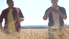 Teamwork smart lifestyle farming. two farmers work in a wheat field. farmers explore are studying. man with digital stock video footage