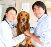 Teamwork at the vet Royalty Free Stock Photos