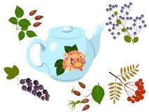 Teapot and berries Stock Photos