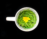 teapot on black. Teapot with grass and flower Royalty Free Stock Photos
